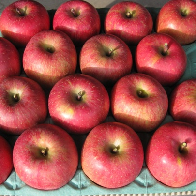 信州りんご サンふじ 家庭用 5kg