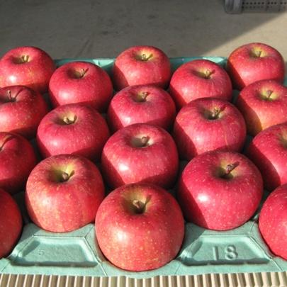 信州りんご サンふじ 贈答用 10kg Mサイズ