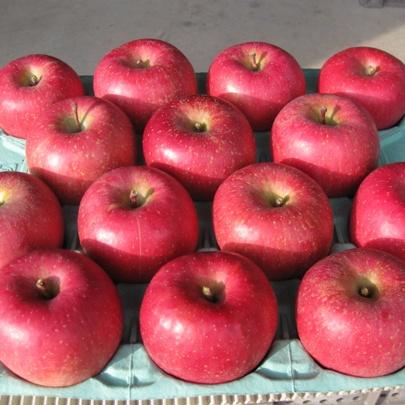 信州りんご サンふじ 贈答用 10kg Lサイズ